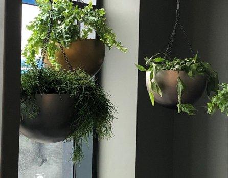 interieurbeplanting-hangende-planten